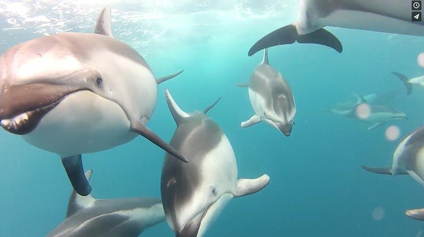 video-dauphin