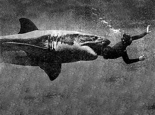 requin-mange_quelqun