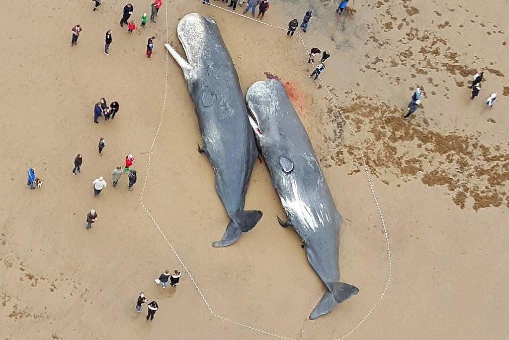 baleines-sur-plage photo DR