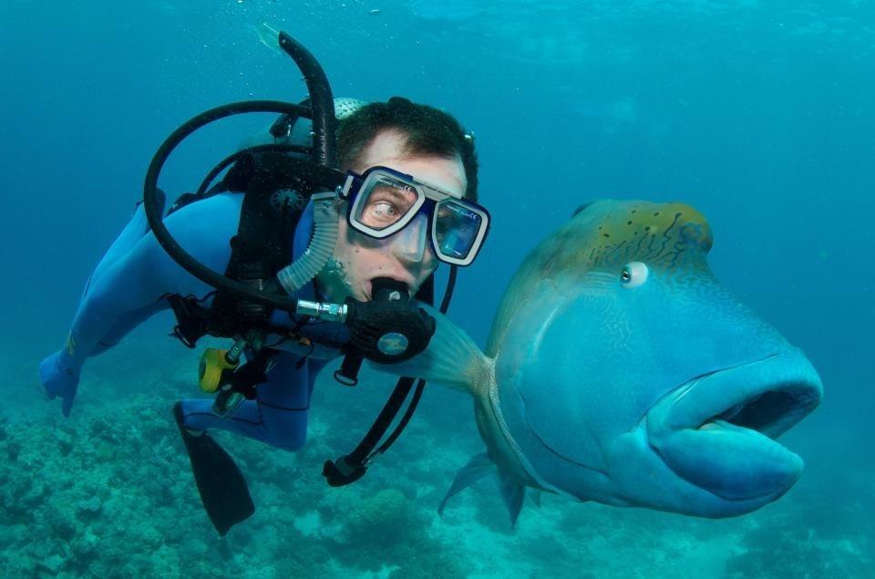 http://widelec.org/i/142343/nurkowanie-w-australii