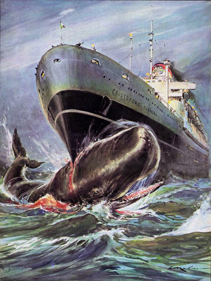 Walter Molino : un paquebot qui découpe une baleine avec sa tranchante étrave.